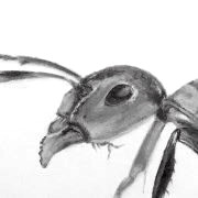 Insects Pencil Drawings