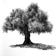 How to draw trees with pens