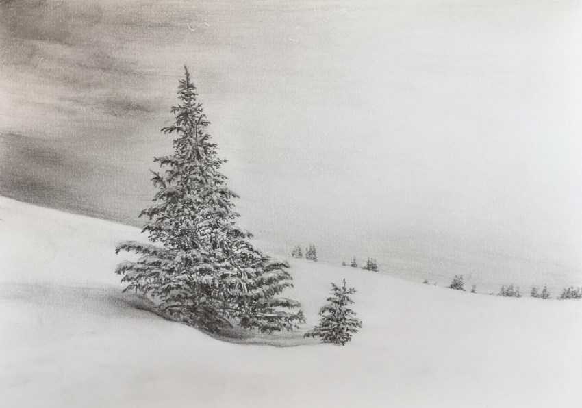 Pencil drawing of a Pine tree in the snow