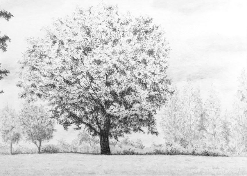 Landscape with trees pencil drawing