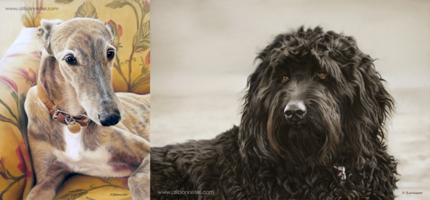 Pet dogs portrait paintings by Ali Bannister
