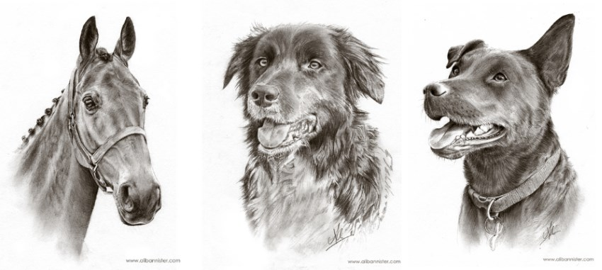 Pet pencil drawing portraits by Ali Bannister