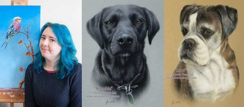Pet dogs portrait paintings by Amanda Drage