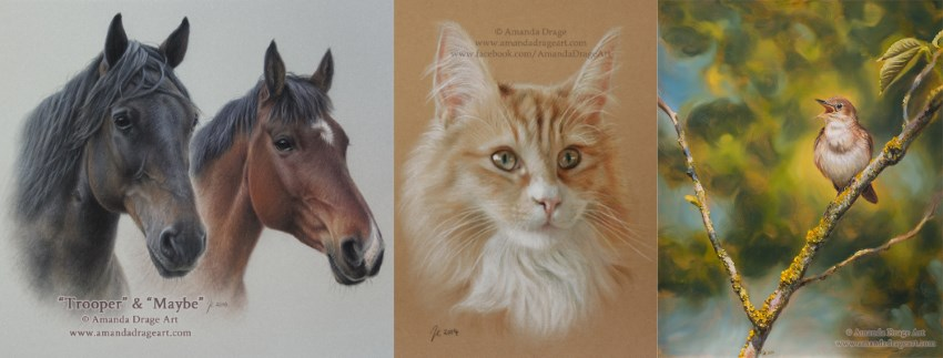 Pet cats, horses & birds portraits, Amanda Drage