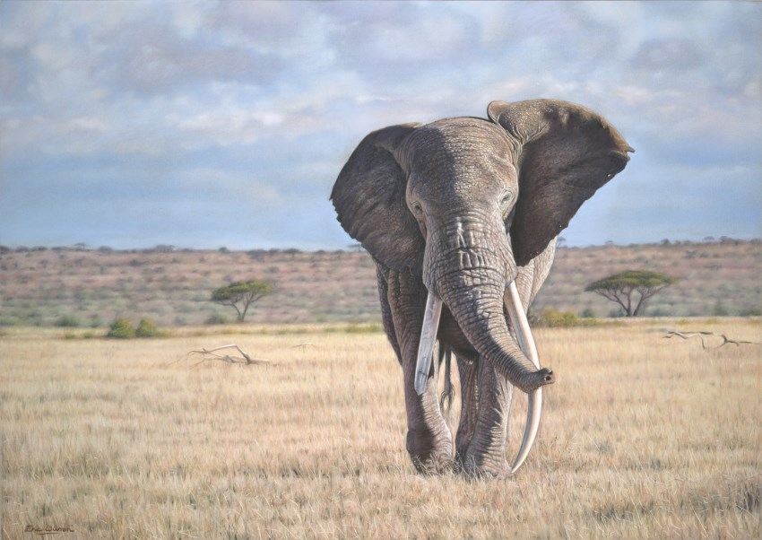 Elephant painting by Eric Wilson
