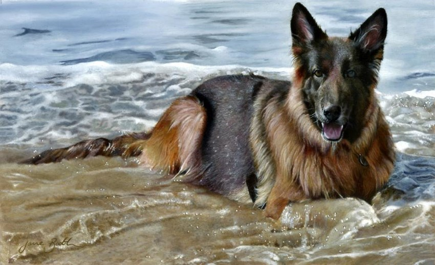 German shepherd dog portrait by Jane Booth