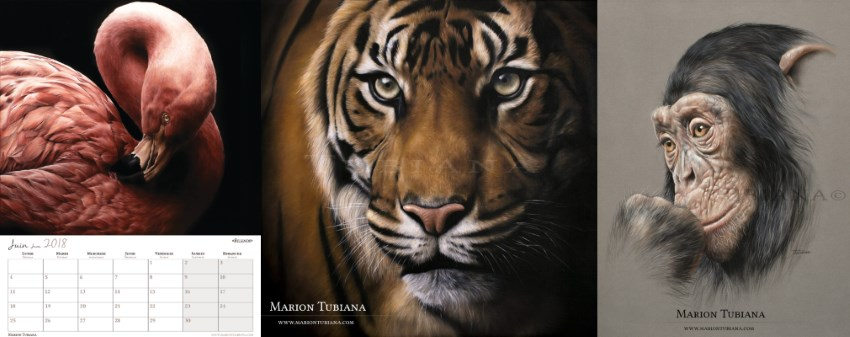 Wildlife paintings by Marion Tubiana