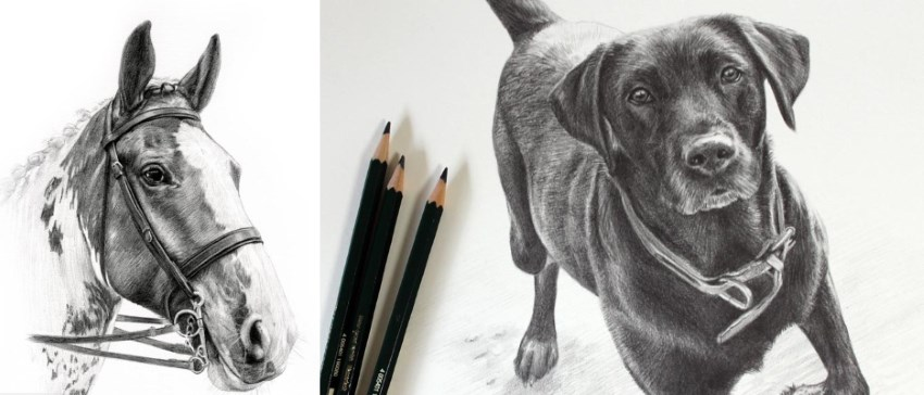 Melanie Phillips pencil drawings of pets