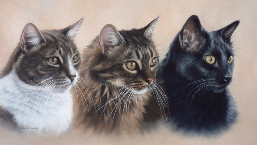 Cats portrait oil painting by Rachel Stribbling