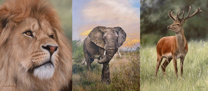 Wildlife paintings by Rachel Stribbling