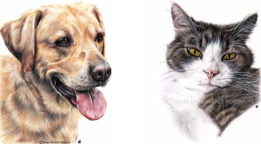 Dog and cat portraits by Sema Martin