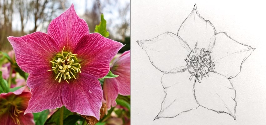 How to Draw Beautiful Floral Art with Pens