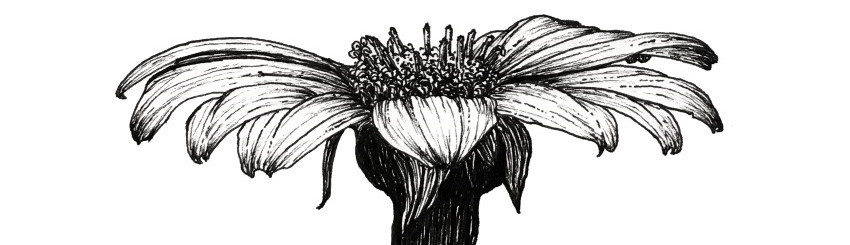 A flower drawing with a fineliner pen