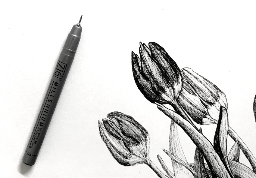 Pen and ink tulip flowers drawing