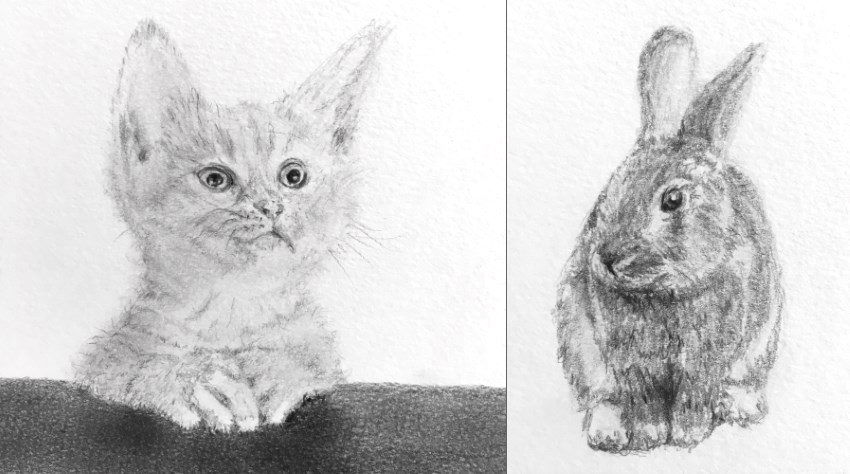 Pencil sketches of a cat and rabbit