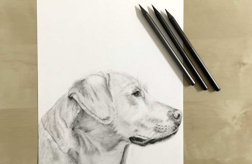 A drawing of a dog using graphite sticks