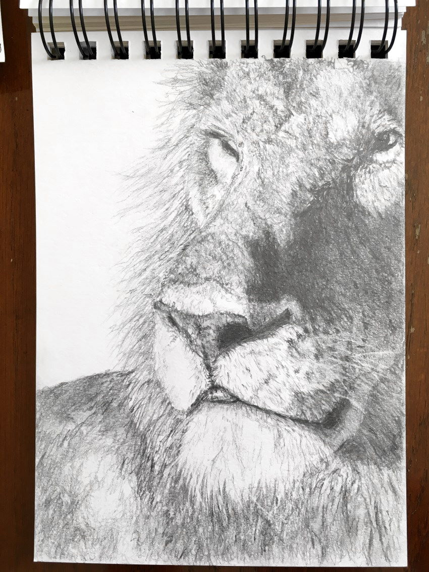 Lion sketch with a mechanical pencil