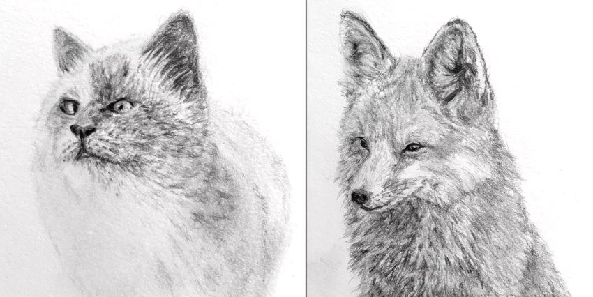 Fox and cat pencil sketches