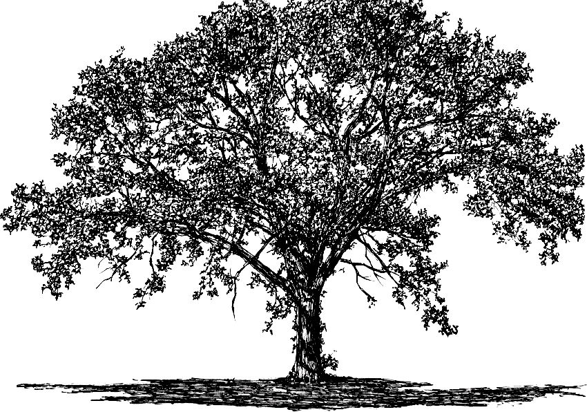 A pen drawing of a tree