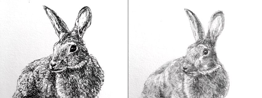 Rabit sketches with pen and pencil