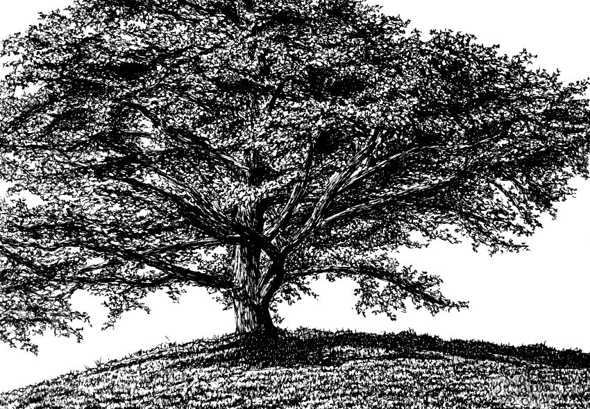 Tree drawing with a pen
