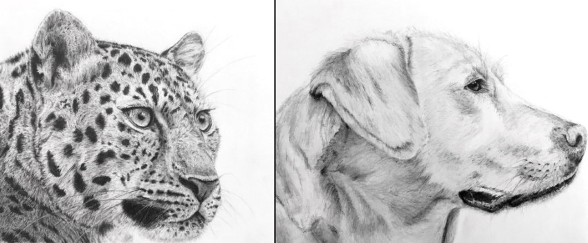Realistic graphite drawings of the animal kingdom