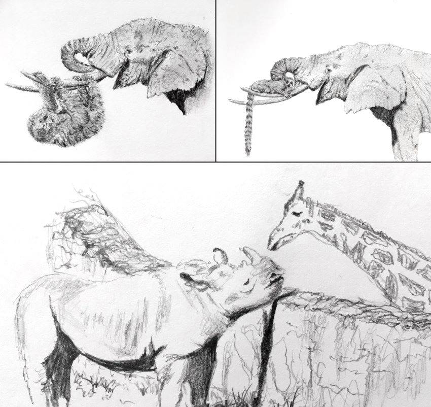 Animal sketches with mechanical pencil