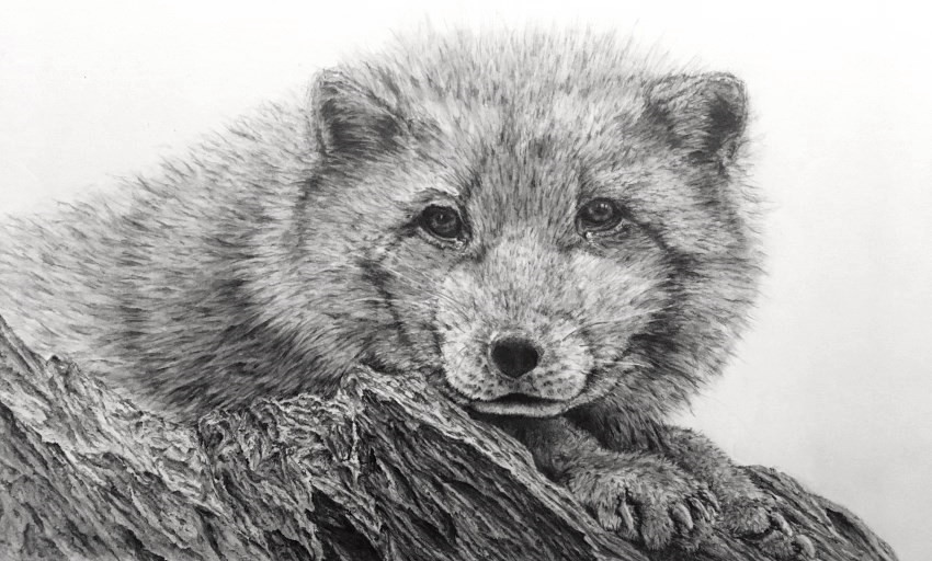 Pencil Drawing Gallery Ran Art Blog