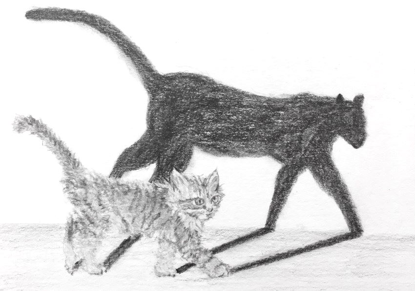 Cat and shadow sketch with mechanical pencil