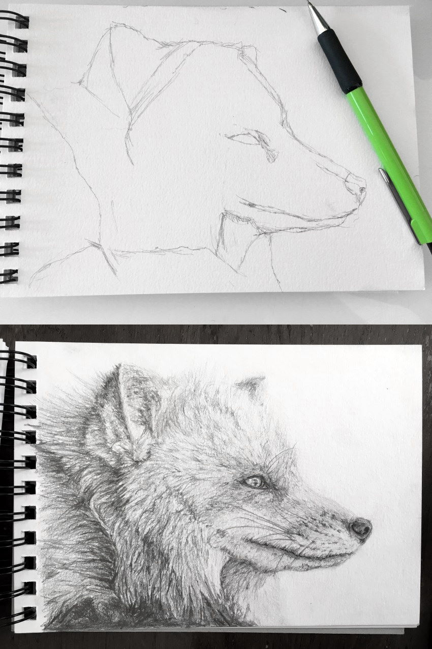 Fox sketch with a mechanical pencil