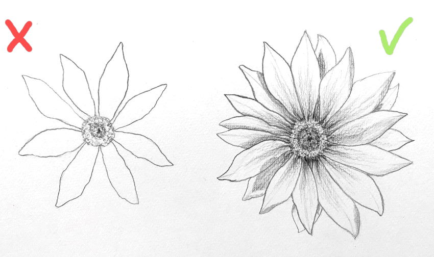 Gazania flower front view pencil drawing