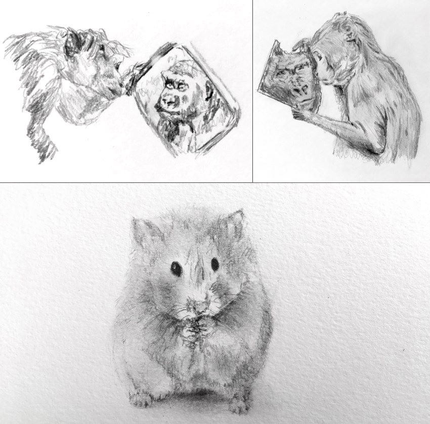 Monkeys and hamster pencil sketches