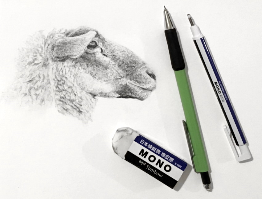 A pencil sketch of a sheep