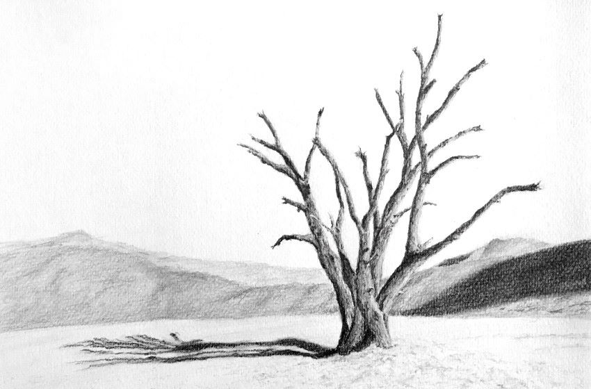 Composition drawing of a tree in desert